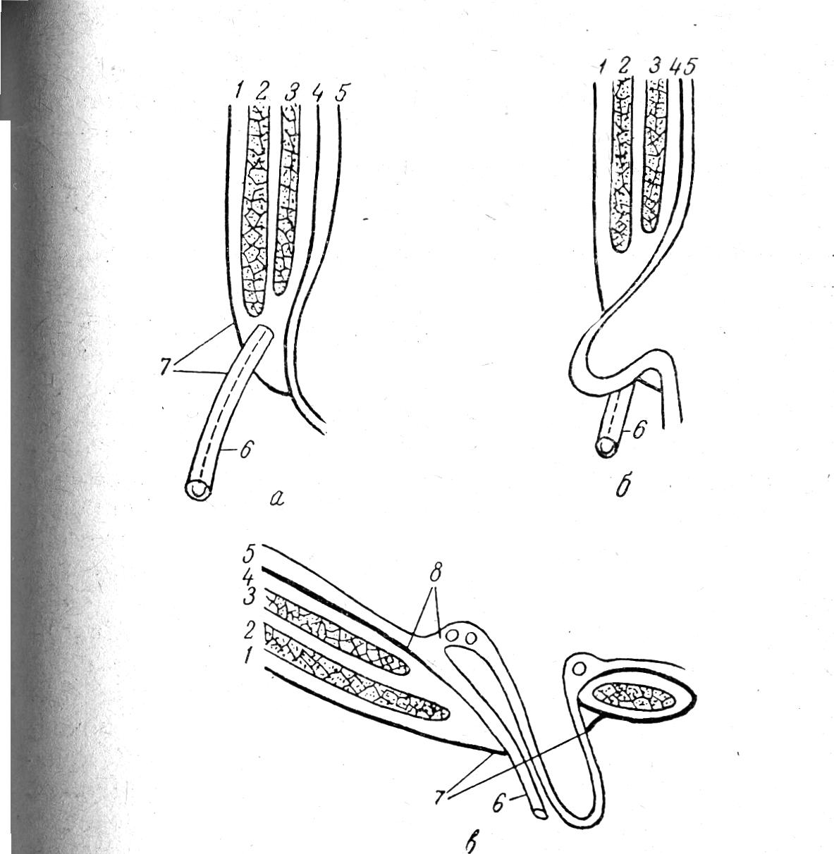 схема топографии мышц спины человека